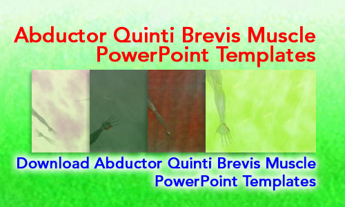 Abductor Quinti Brevis Muscle Medicine PowerPoint Templates