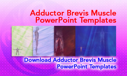 Adductor Brevis Muscle Medicine PowerPoint Templates