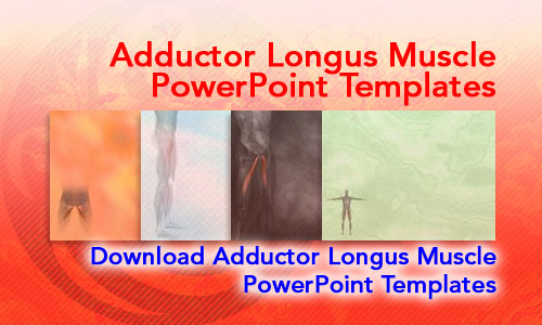 Adductor Longus Muscle Medicine PowerPoint Templates