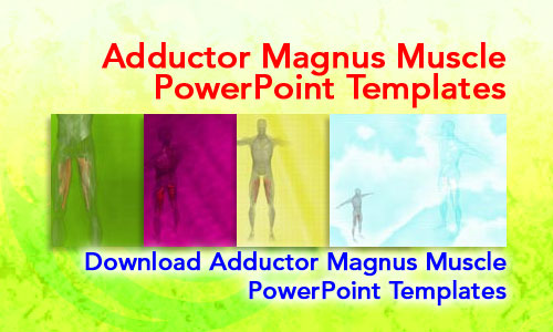 Adductor Magnus Muscle Medicine PowerPoint Templates