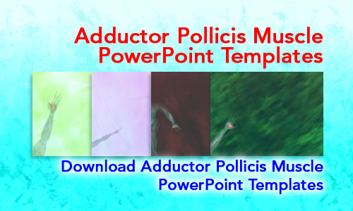 Adductor Pollicis Muscle Medicine PowerPoint Templates