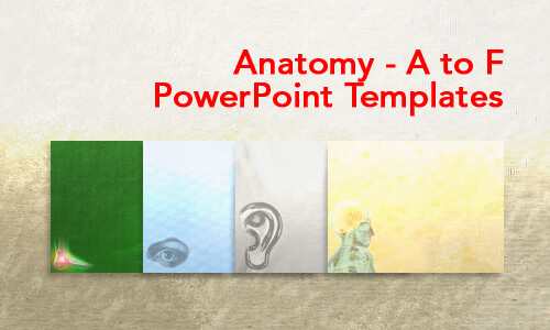 Anatomy - A to F Medical PowerPoint Templates