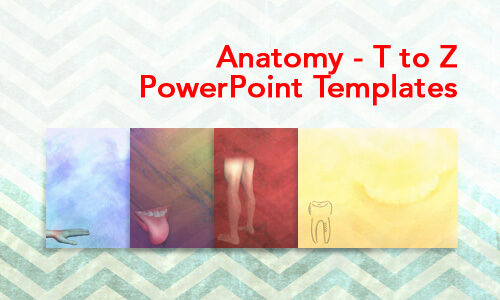 Anatomy - T to Z Medical PowerPoint Templates