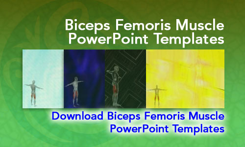 Biceps Femoris Muscle Medicine PowerPoint Templates