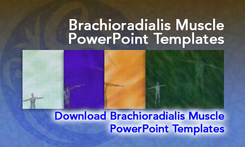 Brachioradialis Muscle Medicine PowerPoint Templates