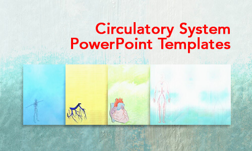 Circulatory System Medical PowerPoint Templates