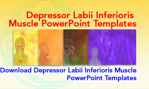 Depressor Labii Inferioris Muscle Medicine PowerPoint Templates