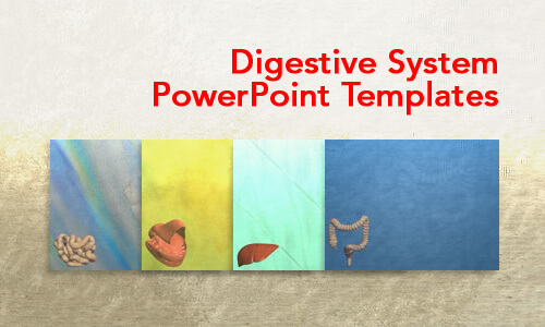 Digestive System Medical PowerPoint Templates