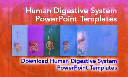 Human digestive system medicine powerpoint templates toneelgroepblik Image collections