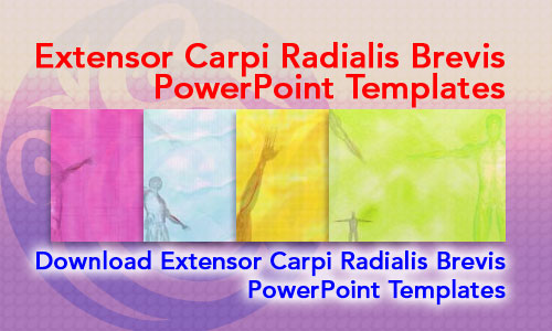 Extensor Carpi Radialis Brevis Muscle Medicine PowerPoint Templates