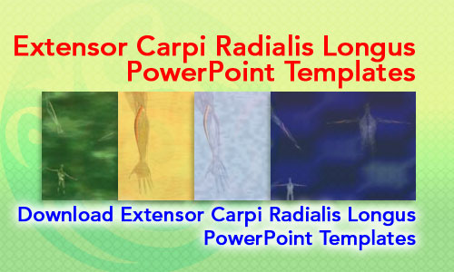 Extensor Carpi Radialis Longus Muscle Medicine PowerPoint Templates