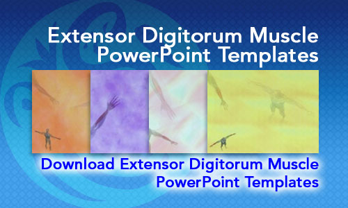 Extensor Digitorum Muscle Medicine PowerPoint Templates