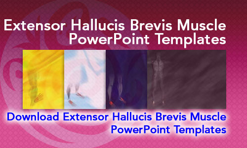 Extensor Hallucis Brevis Muscle Medicine PowerPoint Templates