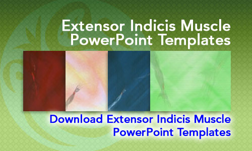 Extensor Indicis Muscle Medicine PowerPoint Templates