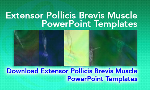Extensor Pollicis Brevis Muscle Medicine PowerPoint Templates