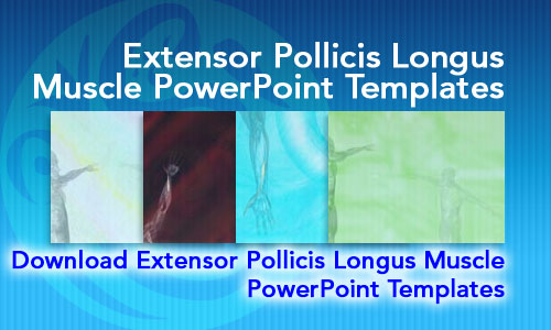 Extensor Pollicis Longus Muscle Medicine PowerPoint Templates