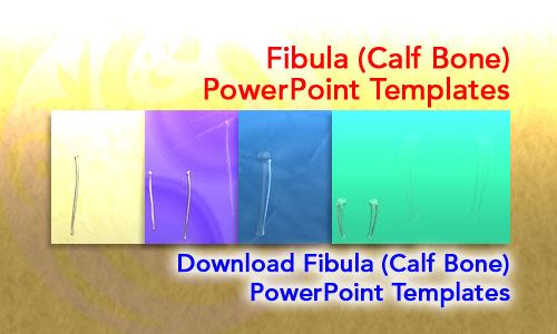Fibula (Calf Bone) Medicine PowerPoint Templates