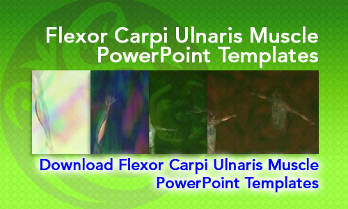 Flexor Carpi Ulnaris Muscle Medicine PowerPoint Templates