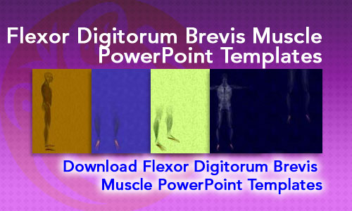 Flexor Digitorum Brevis Muscle Medicine PowerPoint Templates