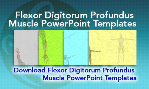 Flexor Digitorum Profundus Muscle Medicine PowerPoint Templates