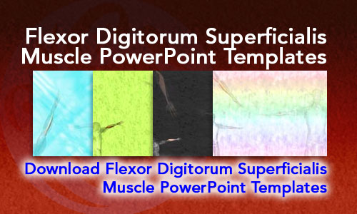 Flexor Digitorum Superficialis Muscle Medicine PowerPoint Templates