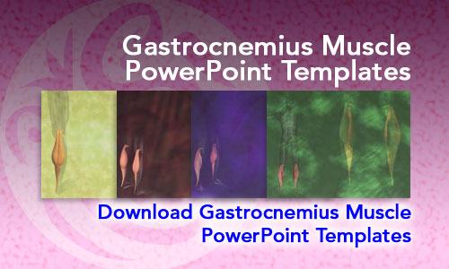 Gastrocnemius Muscle Medicine PowerPoint Templates
