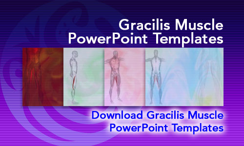 Gracilis Muscle Medicine PowerPoint Templates