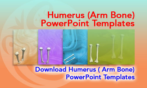 Humerus (Arm Bone) Medicine PowerPoint Templates