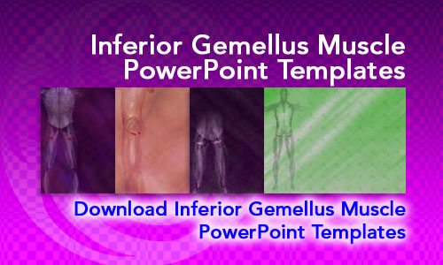 Inferior Gemellus Muscle Medicine PowerPoint Templates