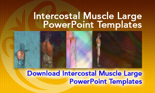 Intercostal Muscle Large Medicine PowerPoint Templates
