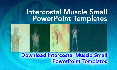 Intercostal Muscle Small Medicine PowerPoint Templates