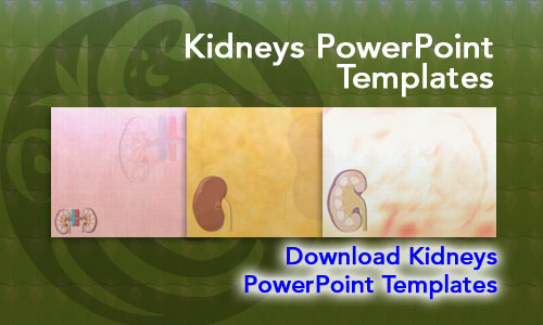 Kidneys Medicine PowerPoint Templates
