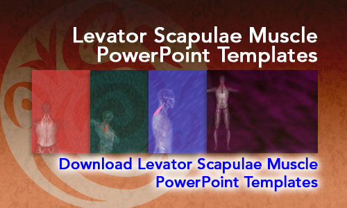 Levator Scapulae Muscle Medicine PowerPoint Templates