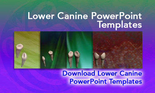 Lower Canine Medicine PowerPoint Templates