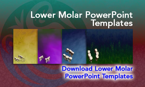 Lower Molar Medicine PowerPoint Templates