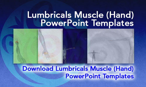 Lumbricals Muscle (Hand) Medicine PowerPoint Templates