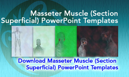 Masseter Muscle (Section Superficial) Medicine PowerPoint Templates