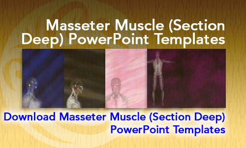 Masseter Muscle (Section Deep) Medicine PowerPoint Templates