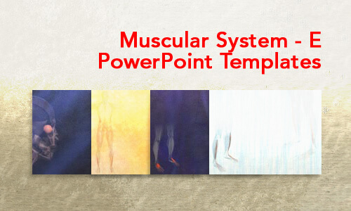 Muscular System - E Medical PowerPoint Templates
