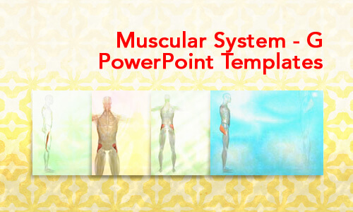 Muscular System - G Medical PowerPoint Templates