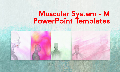 Muscular System - M Medical PowerPoint Templates