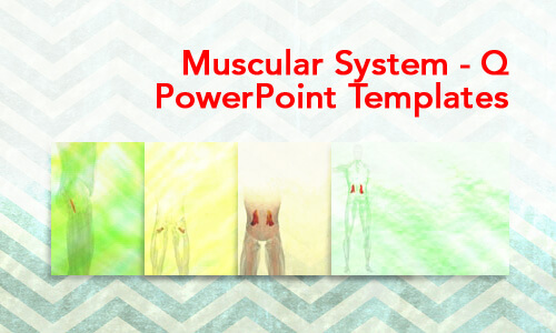 Muscular System - Q Medical PowerPoint Templates