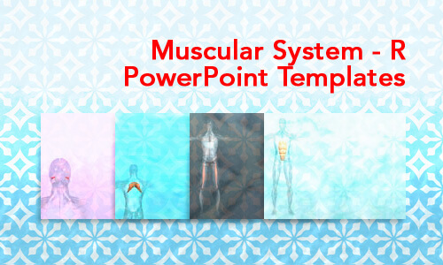 Muscular System - R Medical PowerPoint Templates
