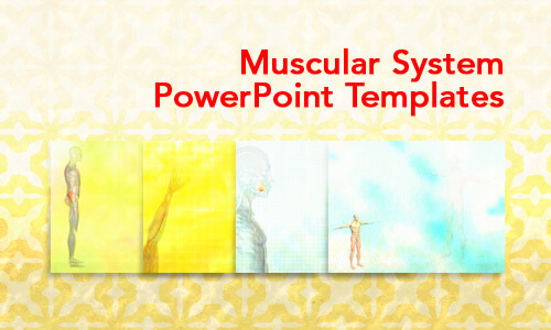 Muscular System Medical PowerPoint Templates