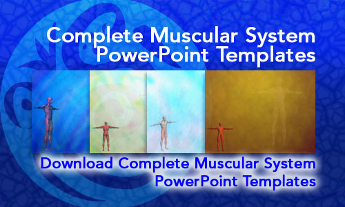 Complete Muscular System Medicine PowerPoint Templates