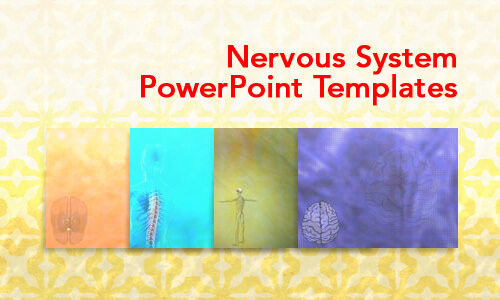 Nervous System Medical PowerPoint Templates