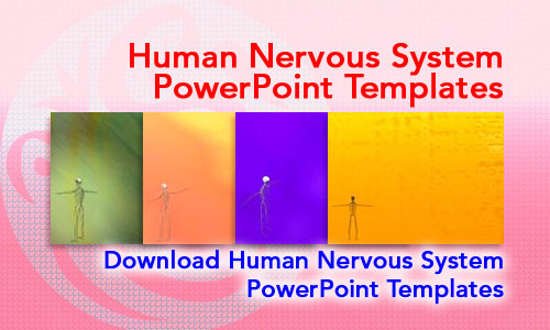 Human Nervous System Medicine PowerPoint Templates