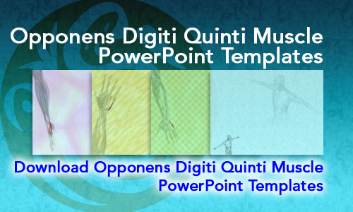 Opponens Digiti Quinti Muscle Medicine PowerPoint Templates
