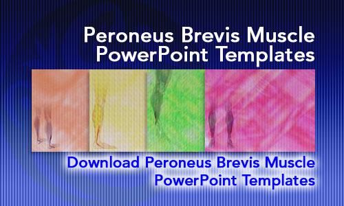 Peroneus Brevis Muscle Medicine PowerPoint Templates