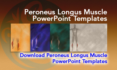 Peroneus Longus Muscle Medicine PowerPoint Templates